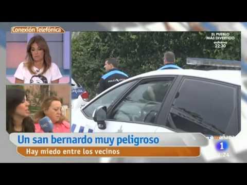 El San Bernardo de San Pedro de Nós enseña los dientes por TVE